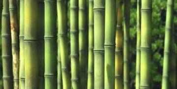 What Bamboo Teaches Us About Small Group Multiplication